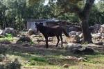 escursioni-cavallo3b