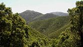 monte-linas